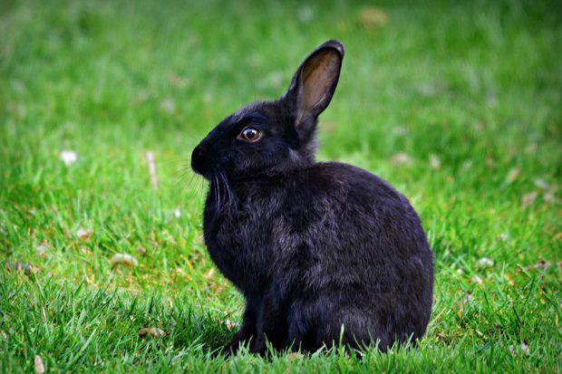 La différence entre une cage à lapin ou un enclos à lapin ?